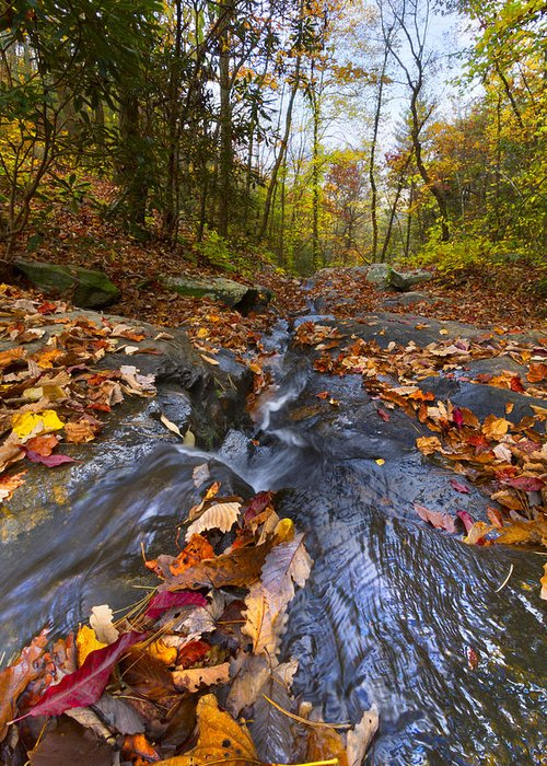 Appalachia Greeting Card featuring the photograph Tumbling Leaves by Debra and Dave Vanderlaan