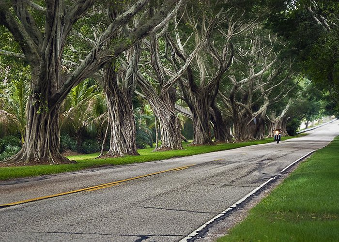 Trees Greeting Card featuring the photograph Tunnel Of Trees by Robert Smith