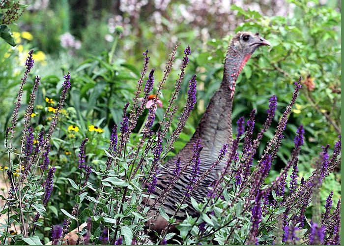 Turkey Greeting Card featuring the photograph Turkey Flowers by Elizabeth Winter