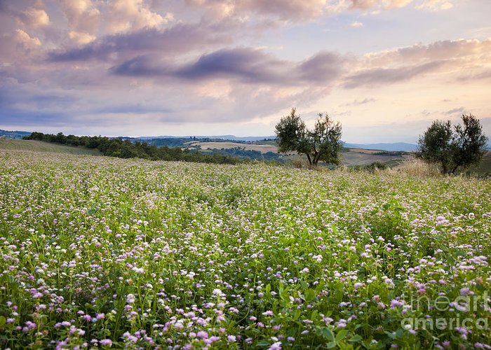 Field Greeting Card featuring the photograph Tuscany Flowers by Brian Jannsen