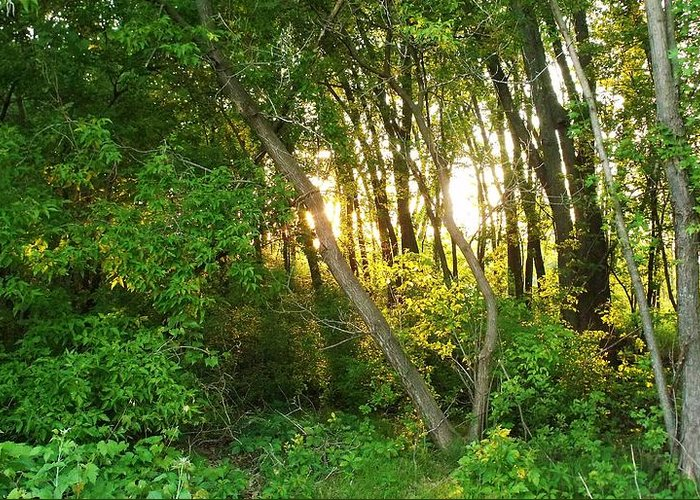 Dusk Greeting Card featuring the photograph Twilight In The Woods by Anna Villarreal Garbis