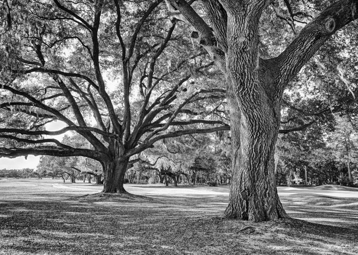 Beaufort County Greeting Card featuring the photograph Under The Oaks by Phill Doherty