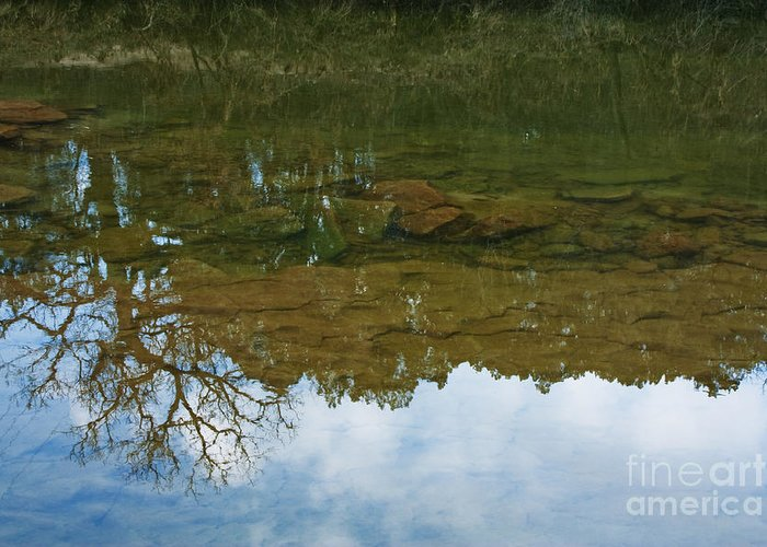 Trees Reflecting In Water Photographs Greeting Cards