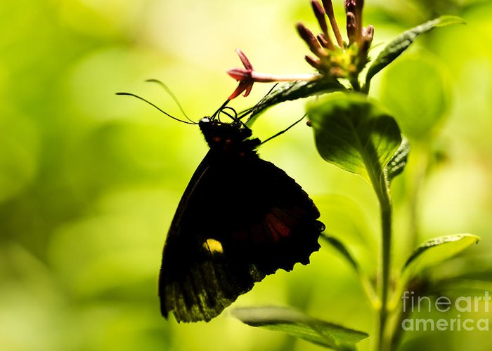Butterfly Greeting Card featuring the photograph Upside Down by Leslie Leda