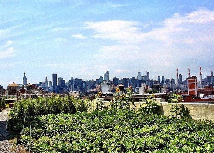 New York City Skyline Greeting Cards
