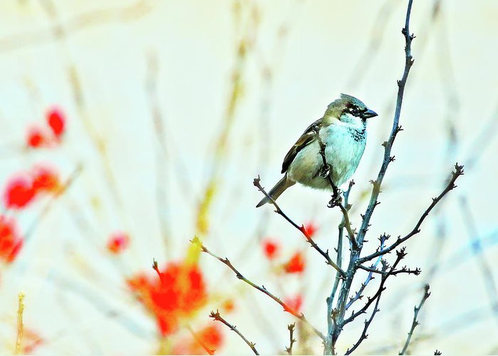 Adorable Greeting Card featuring the photograph Valentine Sparrow by Artistic Photos