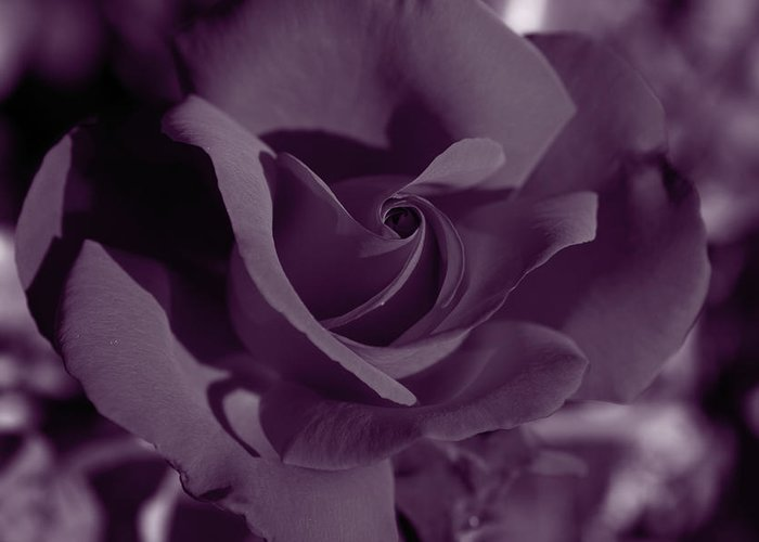 Red Greeting Card featuring the photograph Velvet Rose by Aidan Moran