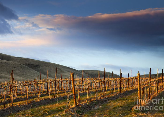 Vineyard Greeting Card featuring the photograph Vineyard Storm by Mike Dawson