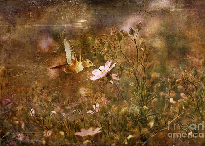 Humming Bird Greeting Card featuring the photograph Vintage Beauty In Nature by Susan Gary