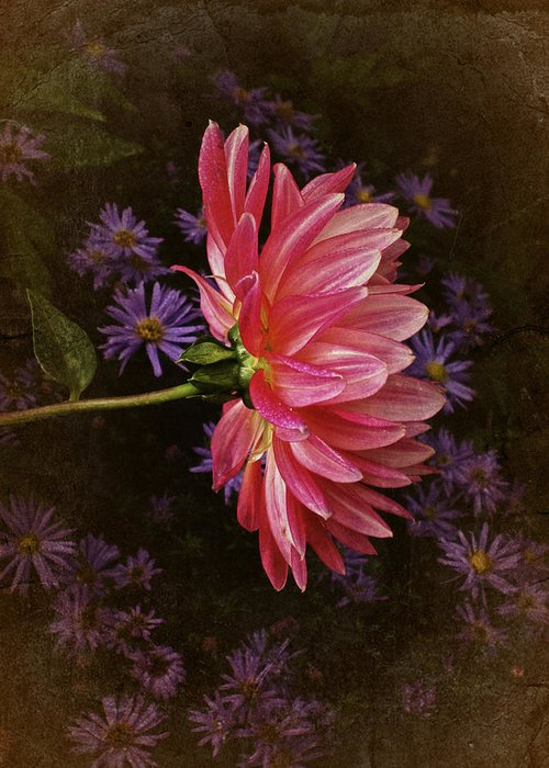 Dahlia Greeting Card featuring the photograph Vintage October Dahlia by Richard Cummings