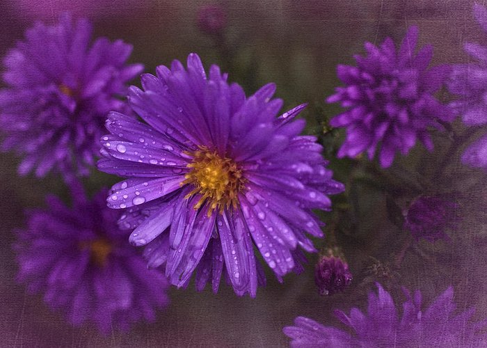 Purple Asters Greeting Card featuring the photograph Vintage Purple by Richard Cummings