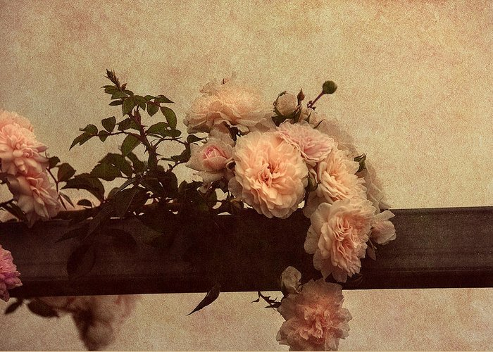 Vintage Roses Greeting Card featuring the photograph Vintage Roses by Georgiana Romanovna