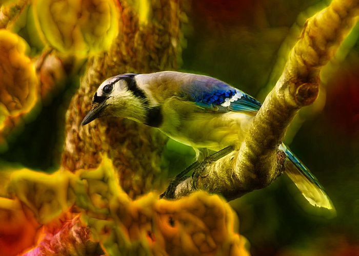Blue Jay Greeting Card featuring the photograph Visions Of A Blue Jay by Bill Tiepelman