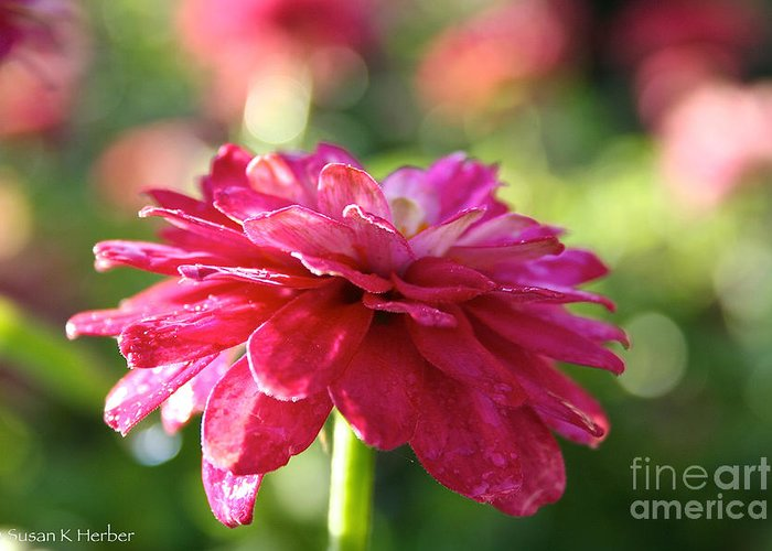 Flower Greeting Card featuring the photograph Vivid Floral by Susan Herber