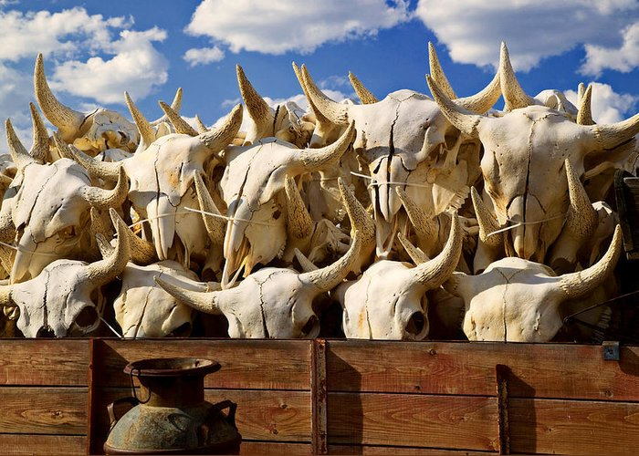 Bison Skulls Greeting Card featuring the photograph Wagon Full Of Animal Skulls by Garry Gay