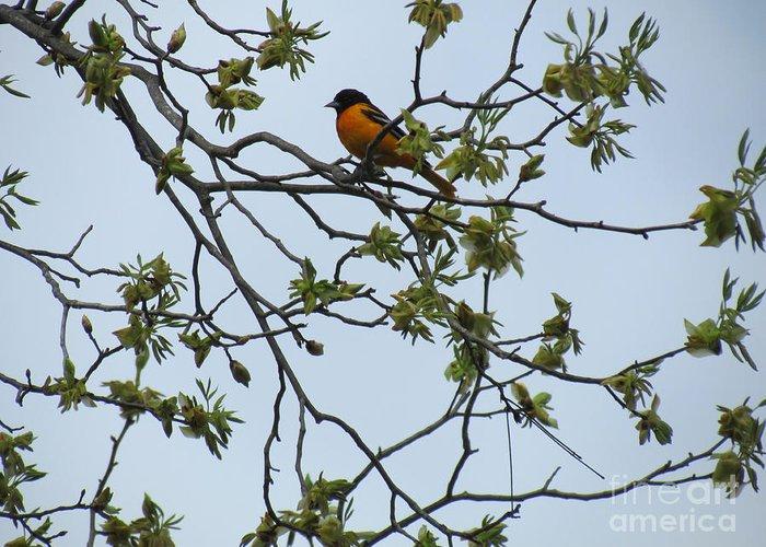 Bird Greeting Card featuring the photograph Waiting by Randi Shenkman