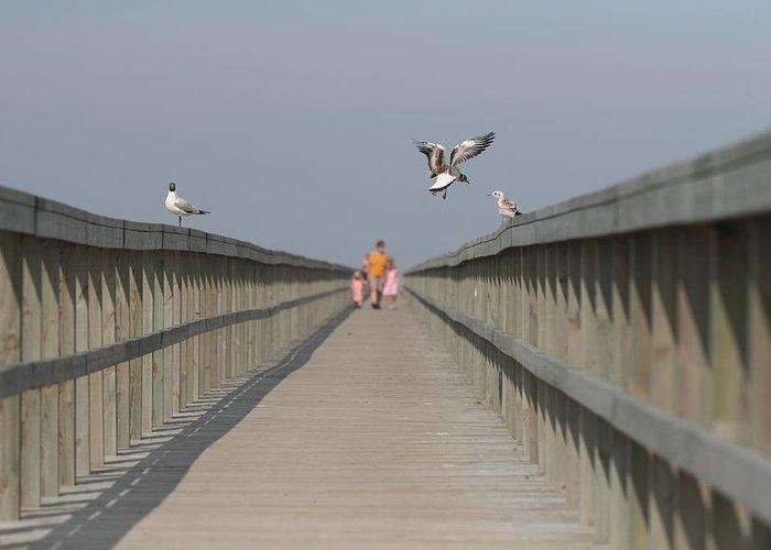 Bridge Greeting Card featuring the photograph Walking Over The Bridge by Kent Andersen
