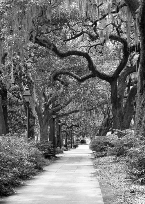 Black And White Greeting Card featuring the photograph Walking Through The Park In Black And White by Suzanne Gaff