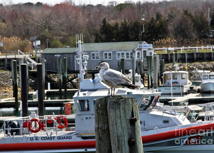 Cape Cod Greeting Card featuring the photograph Watchful by Extrospection Art