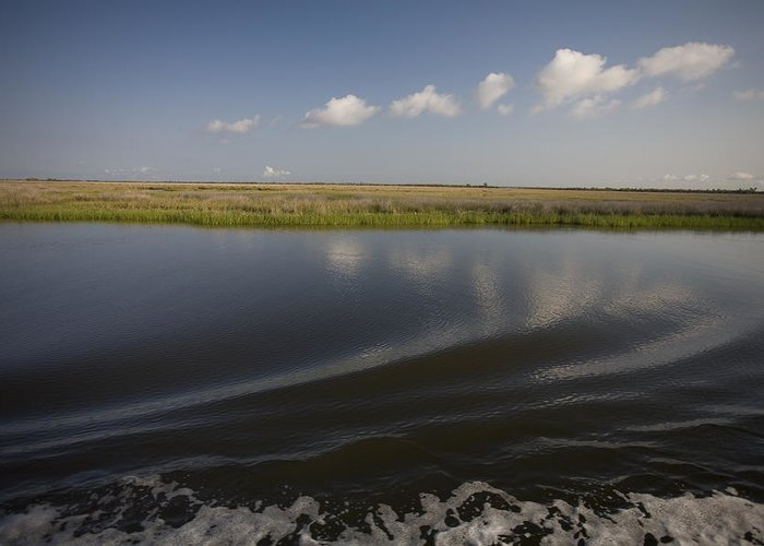 Day Greeting Card featuring the photograph Water And Marsh In Plaquemines Parish by Tyrone Turner
