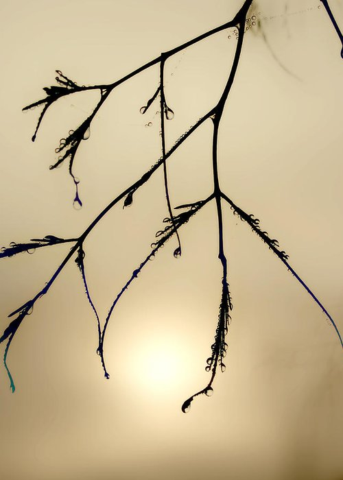 Branches Greeting Card featuring the photograph Water Droplets by Jim Painter
