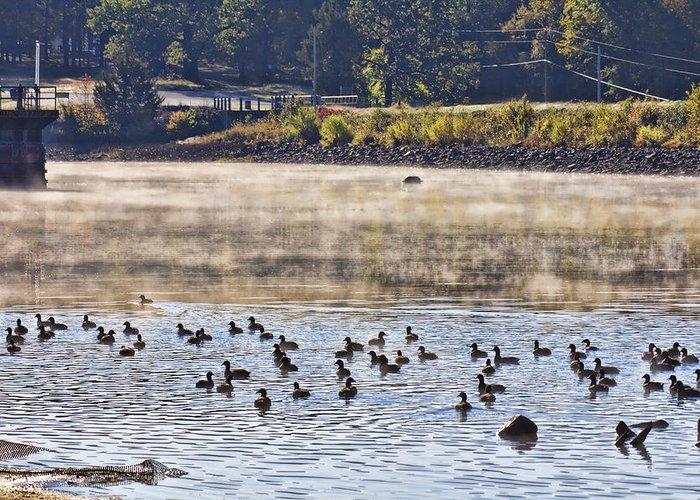 Water Fowl Greeting Card featuring the photograph Water Fowl At Lake Wilhelmina Arkansas by Douglas Barnard