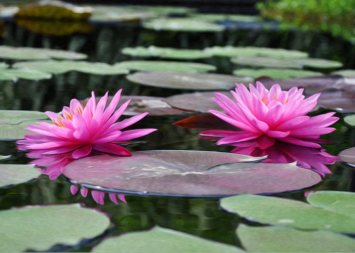 Water Lilies Greeting Card featuring the photograph Water Lilies by Bill Cannon