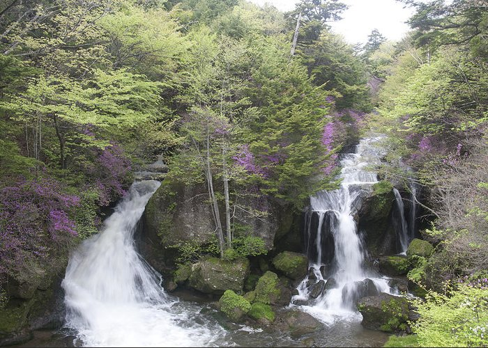 Water Greeting Card featuring the photograph Waterfall In Spring by Masami Iida