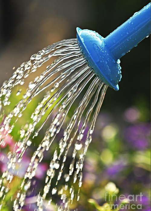 Water Greeting Card featuring the photograph Watering Flowers by Elena Elisseeva