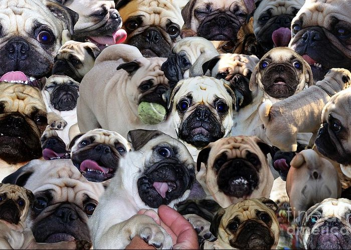 Pug Greeting Card featuring the photograph We Love Uno by Erica Hanel