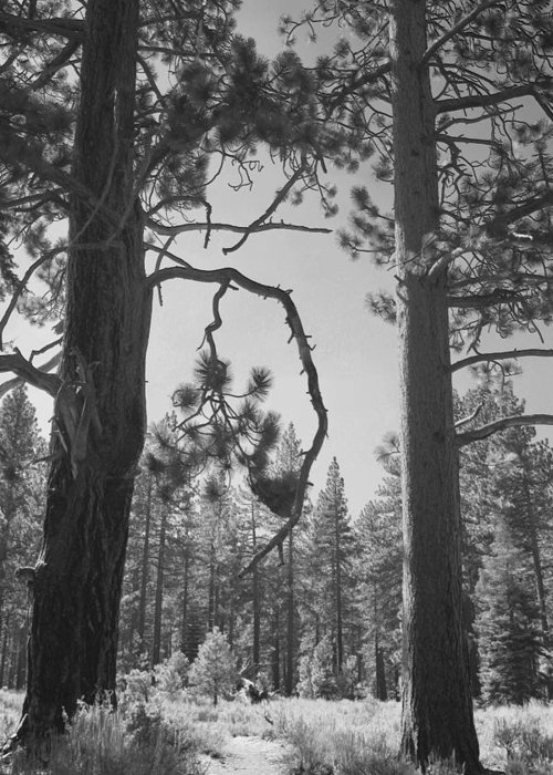 Lake Tahoe Greeting Card featuring the photograph We Two by Laurie Search