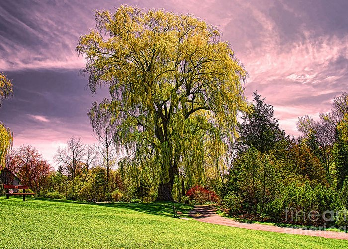 Weeping willow tree greeting card for sale by elaine manley tree greeting card featuring the photograph weeping willow tree by elaine manley m4hsunfo