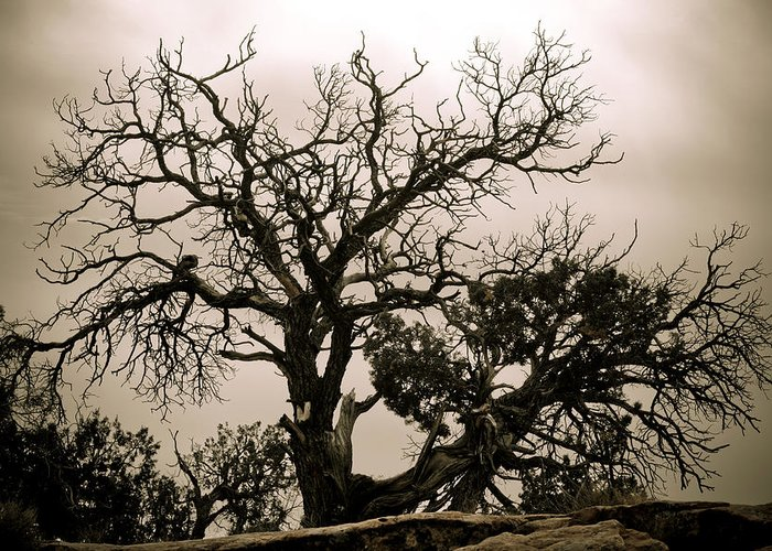 Nature Greeting Card featuring the photograph Western Winter Tree by Marilyn Hunt