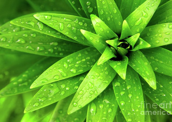 Blades Greeting Card featuring the photograph Wet Foliage by Carlos Caetano
