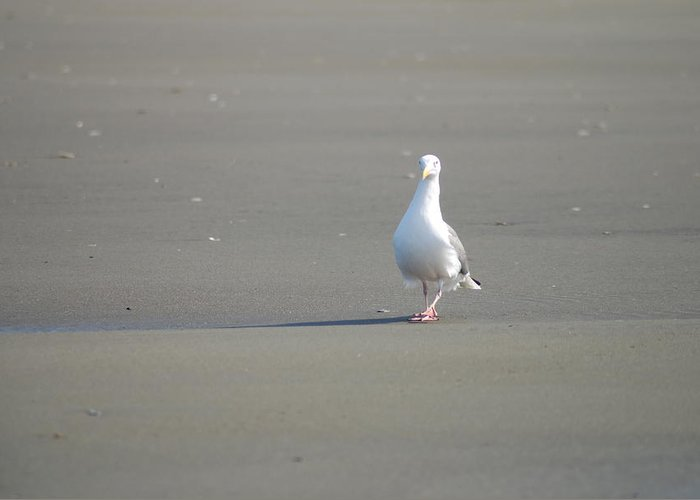 Gull Greeting Card featuring the photograph What Are You Looking At by Michael Merry