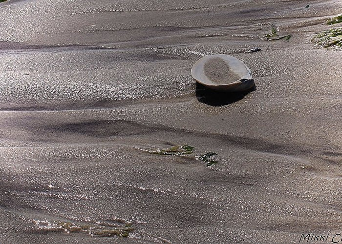 Shore Greeting Card featuring the photograph What The Tide Left Behind by Mikki Cucuzzo