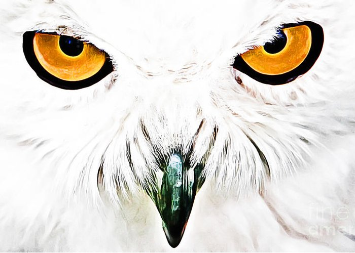 Owl Greeting Card featuring the digital art What You Looking At by The DigArtisT