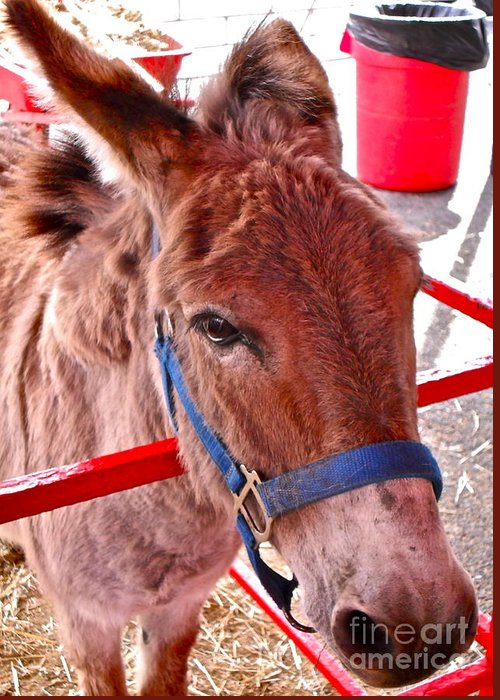 Mule Greeting Card featuring the photograph What's That Smell  Russ by Beth Saffer