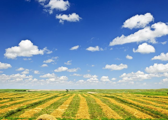 Agriculture Greeting Card featuring the photograph Wheat Farm Field At Harvest by Elena Elisseeva