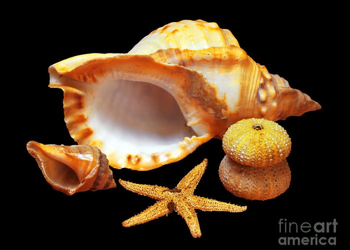 Animal Greeting Card featuring the photograph Whelk by Carlos Caetano
