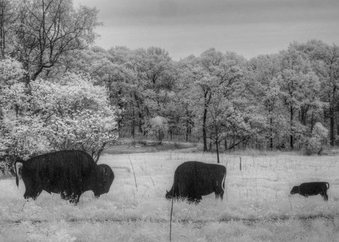 Buffaloe Greeting Card featuring the photograph Where The Buffalo Roam by Jane Linders