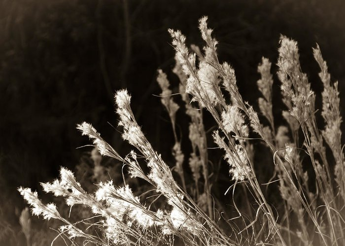 Grass Greeting Card featuring the photograph Whisper Gently by Carolyn Marshall