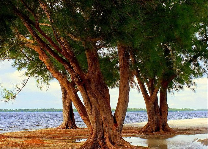 Landscapes Greeting Card featuring the photograph Whispering Trees Of Sanibel by Karen Wiles