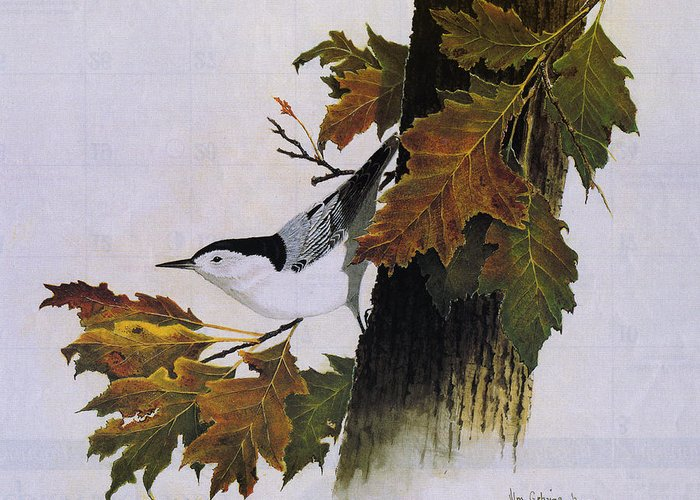 Bird Greeting Card featuring the painting White-breasted Nuthatch by Bill Gehring