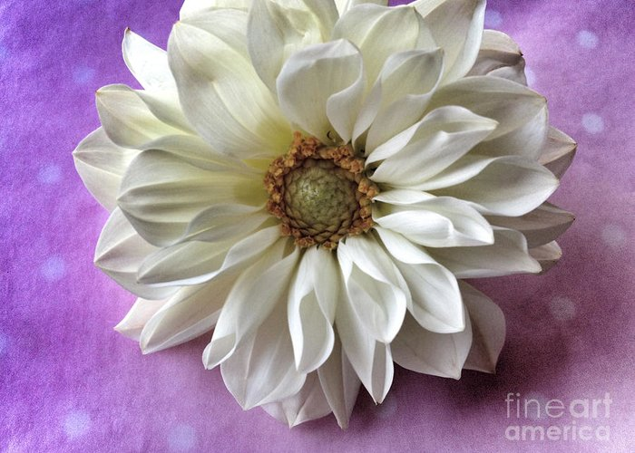 Dahlia Greeting Card featuring the photograph White Dahlia On Polka Dots by Ruby Hummersmith