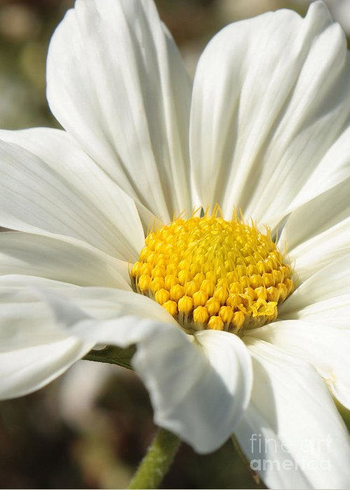 White Flower Greeting Card featuring the photograph White Flower by Carol Groenen