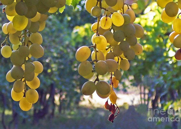 Grapes Greeting Card featuring the photograph White Grapes by Barbara McMahon