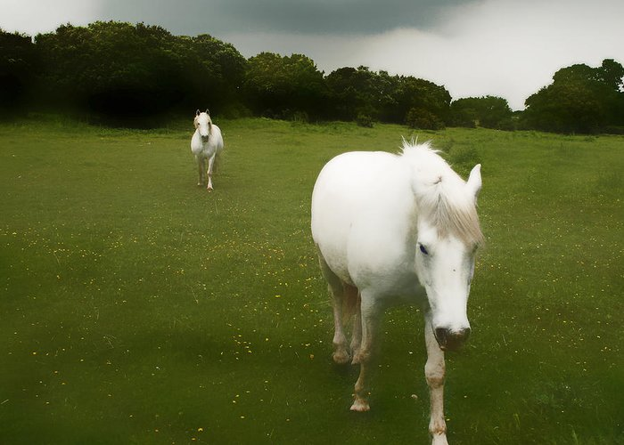 Camargue Greeting Card featuring the photograph White Horses by Jim Painter