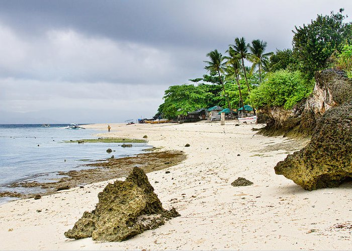 Tropical Greeting Card featuring the photograph White Sand Beach Moal Boel Philippines by James BO Insogna