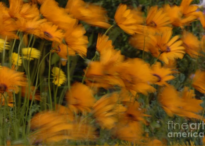 Flowers Greeting Card featuring the photograph Who Has Seen The Wind by Bob Christopher
